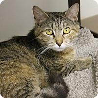 Adopt A Pet :: Gordita - Medina, OH