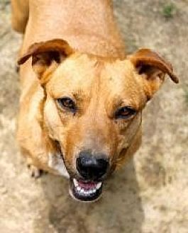 Shepherd (Unknown Type) Mix Dog for adoption in Memphis, Tennessee - Arie
