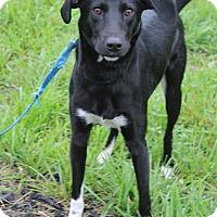 Adopt A Pet :: Remmy - Waldorf, MD