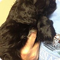 Adopt A Pet :: Jimmy - Toluca Lake, CA