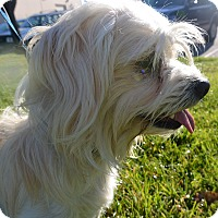 Adopt A Pet :: Hero - Meridian, ID