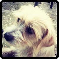 Adopt A Pet :: Roxie - Grand Bay, AL