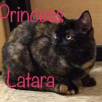 Adopt A Pet :: Princess Latara - Maryville, TN