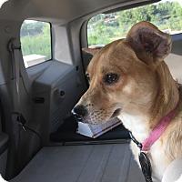 Adopt A Pet :: Honey - Kingston, TN