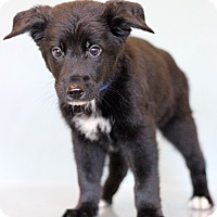 Adopt A Pet :: Chance - Waldorf, MD