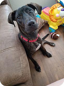 Hound (Unknown Type) Mix Puppy for adoption in Frederick, Maryland - Gunner