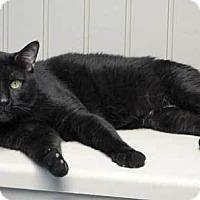 Adopt A Pet :: Ripley - Batavia, OH