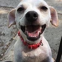 Adopt A Pet :: Zelda - Prosser, WA