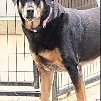 Adopt A Pet :: Allie - Newaygo, MI