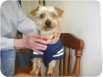 """Terrier (Unknown Type, Small) Mix Dog for adoption in MARION, Virginia - """"Mike"""""""