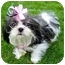 Photo 4 - Shih Tzu Puppy for adoption in Los Angeles, California - BELL