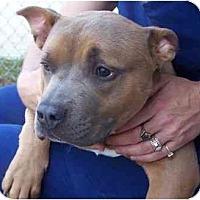 Adopt A Pet :: PJ - Reisterstown, MD