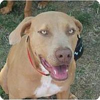 Adopt A Pet :: December - Arlington, TX