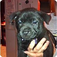 Adopt A Pet :: River - Orlando, FL