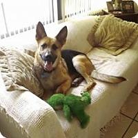 Adopt A Pet :: Issac - Green Cove Springs, FL