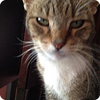 Adopt A Pet :: Bob - East Hanover, NJ