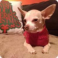 Adopt A Pet :: Kingsley - AUSTIN, TX