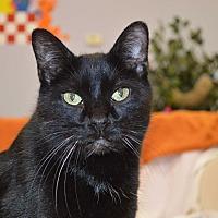 Adopt A Pet :: Summer - House Springs, MO