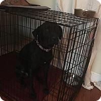 Adopt A Pet :: Bella - Coral Springs, FL