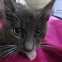 Adopt A Pet :: Gator - Coos Bay, OR