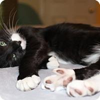 Adopt A Pet :: Benjamin - North Highlands, CA