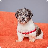 Adopt A Pet :: Tameus - Mission Hills, CA