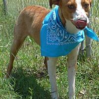 Adopt A Pet :: Eli - Manning, SC