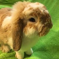 Adopt A Pet :: Butterscotch - Sunset, LA