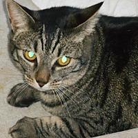Adopt A Pet :: Rosita - North Highlands, CA
