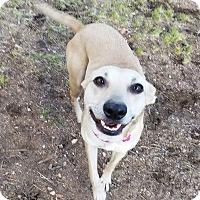 Adopt A Pet :: Tabitha - Englewood, CO