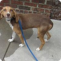 Adopt A Pet :: Sissy - Warrenton, NC
