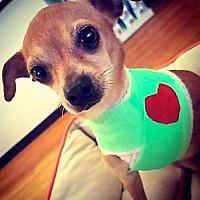 Adopt A Pet :: Neiman - San Diego, CA