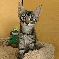 Adopt A Pet :: Jasmine - Winchester, CA
