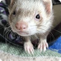 Adopt A Pet :: FINN - Brandy Station, VA