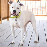 Adopt A Pet :: Gunther - Fresno, CA