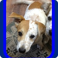 Adopt A Pet :: OLIVER - Allentown, PA