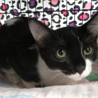 Adopt A Pet :: Ross - Menomonie, WI