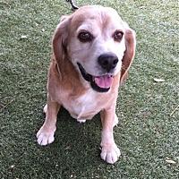 Adopt A Pet :: Jeter - Temecula, CA