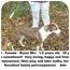 Photo 1 - Boxer Mix Dog for adoption in Zanesville, Ohio - # 667-09 @ Animal Shelter