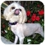 Photo 3 - Lhasa Apso Dog for adoption in Los Angeles, California - HONEE