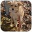 Photo 2 - Carolina Dog Mix Dog for adoption in Spruce Pine, North Carolina - Sammy
