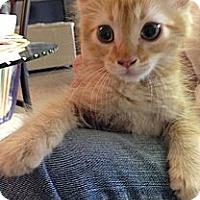 Adopt A Pet :: Gumbo - Harvey, LA