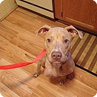 Adopt A Pet :: Wynter - Fenton, MI