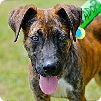 Adopt A Pet :: Jerry - Hastings, NY