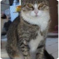 Adopt A Pet :: Mama Kiss - El Cajon, CA