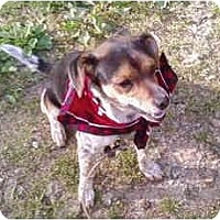 Adopt A Pet :: Cutie - Indianapolis, IN