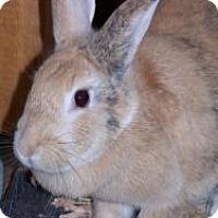 Adopt A Pet :: Foxy - Quilcene, WA