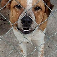 Adopt A Pet :: Ruffie - Darien, GA