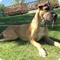 Adopt A Pet :: Hank - St. Louis, MO