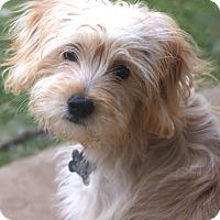 Adopt A Pet :: Carolina - Woonsocket, RI